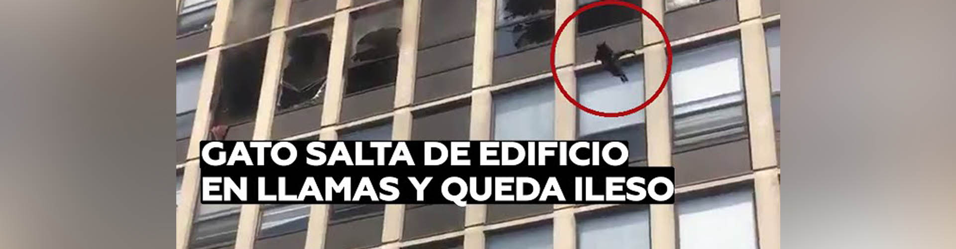 (VIDEO) Un gato salta desde la quinta planta de un edificio en llamas y sobrevive