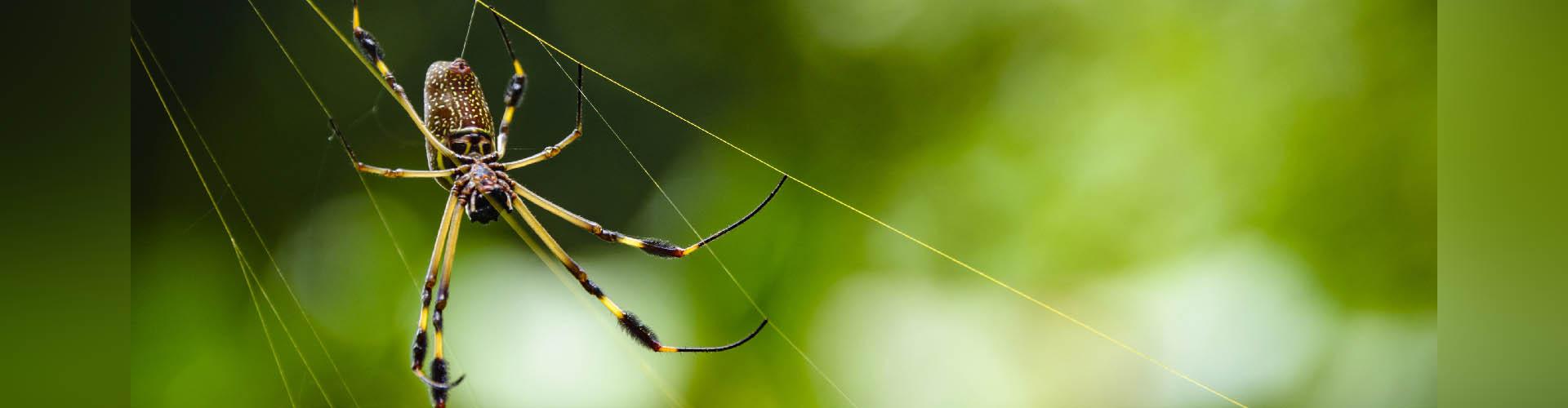 Un superantiadhesivo inspirado en las patas de las arañas